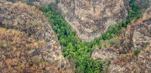 Post de La misión secreta de Australia: salvar los últimos 200 árboles jurásicos del planeta
