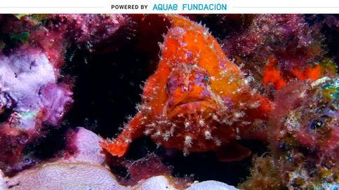 Para el pez rana la supervivencia no es una lucha, sino un arte