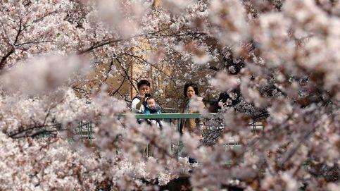 Los cerezos en flor hacen a los japoneses salir de casa pese al confinamiento