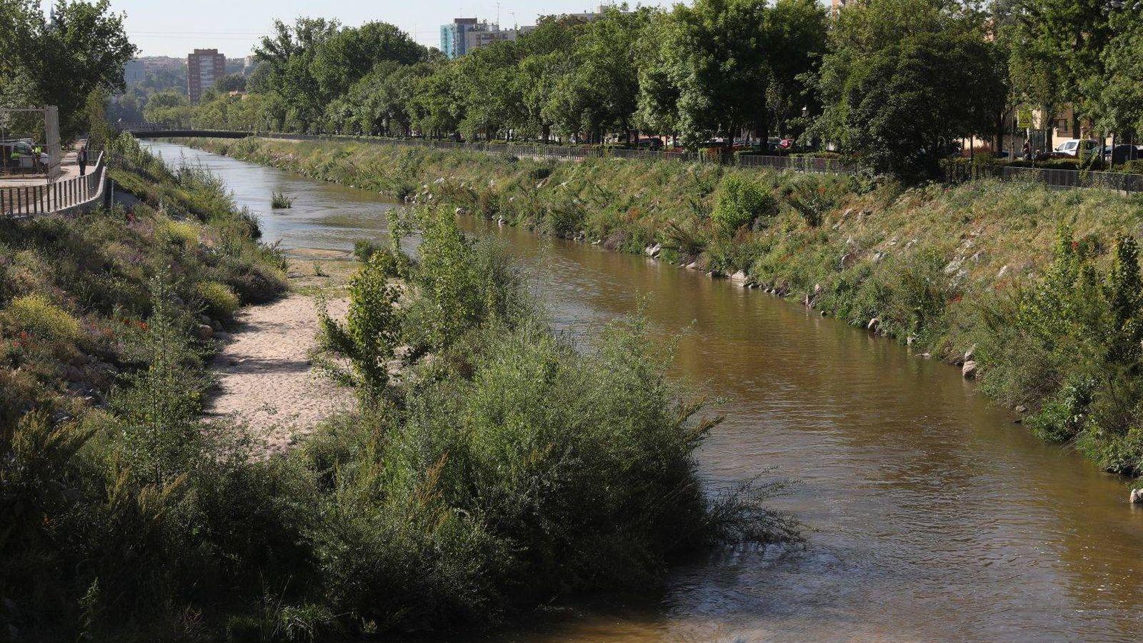 Foto: El río Manzanares, tras las labores de renaturalización en uno de sus tramos urbanos. (Ayuntamiento de Madrid)
