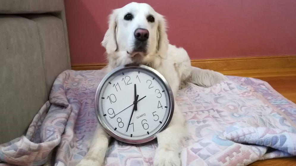 Foto: Las mascotas saben perfectamente cuándo es su hora de comer