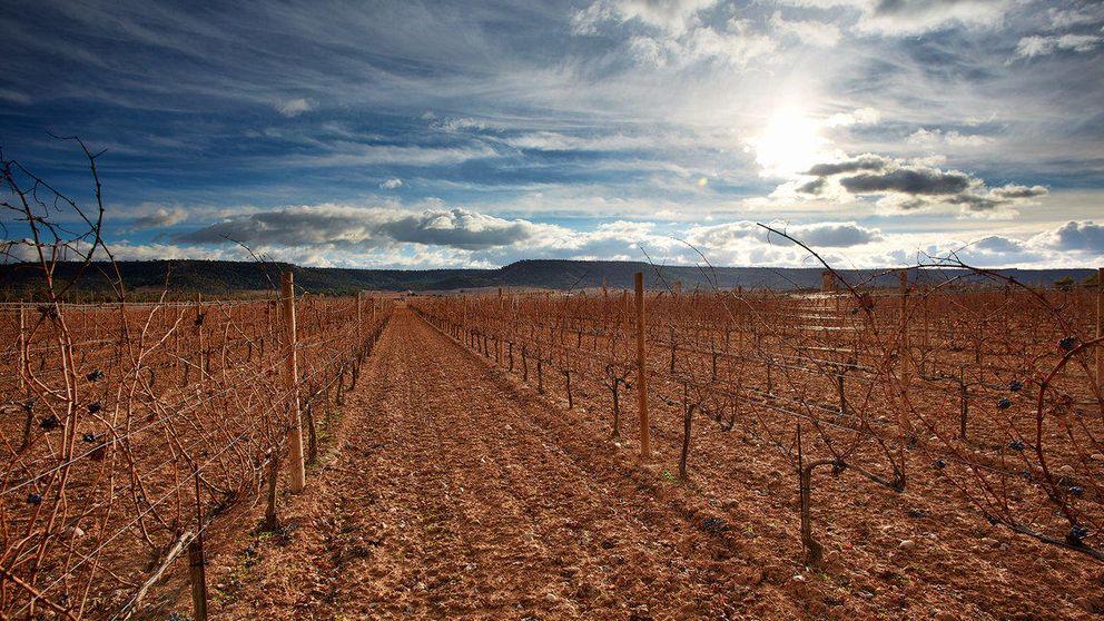 Vega Sicilia, la renovación de la leyenda española del vino