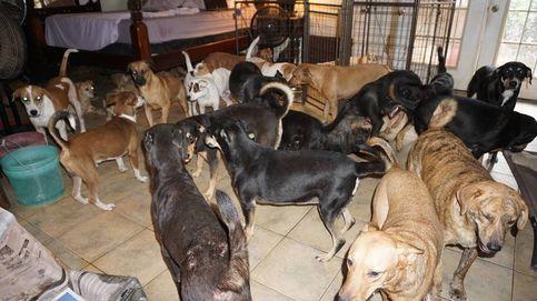 Una mujer acoge a 97 perros callejeros en su casa para salvarlos del huracán Dorian