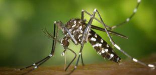 Post de Los 5 insectos más peligrosos y cómo evitarlos, según la OCU