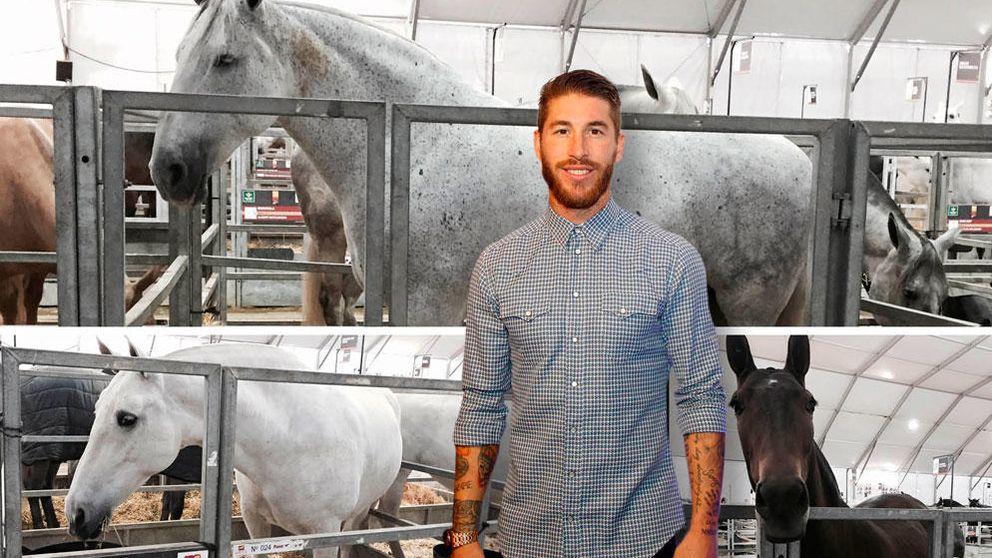 Te presentamos a las 'hijas' de Sergio Ramos: sus yeguas