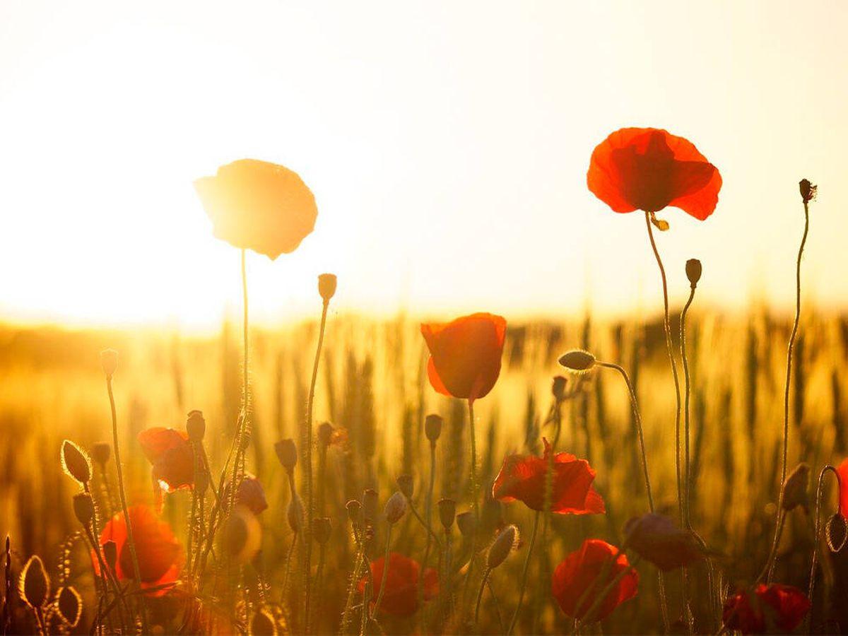 Foto: Las plantas y flores más resistentes al sol para terrazas (Pixabay)