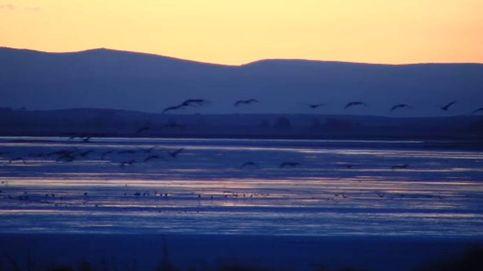 Las grullas de Gallocanta dan la bienvenida al frío