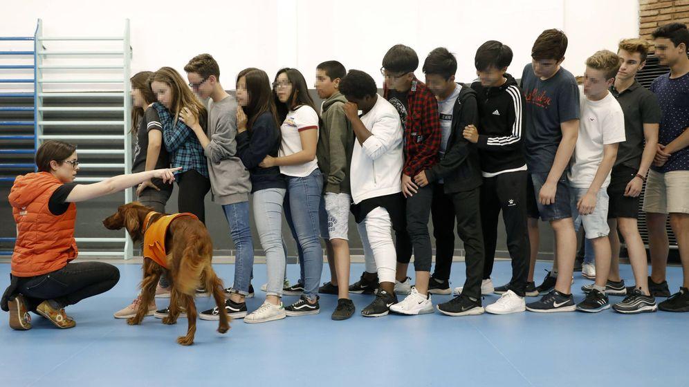 Foto: La Fundación Affinity y la escuela Lleó XIII de Barcelona, durante un ejercicio de terapia con perros para prevenir el acoso en las aulas. (EFE)