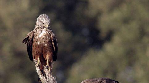 El mayor caso de envenenamiento de fauna en España llega a juicio con cuatro imputados