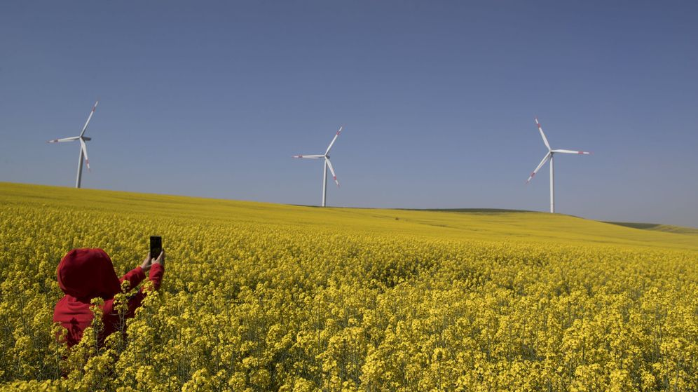 Foto: Foto de recurso de un campo con aerogeneradores al fondo. (EFE)