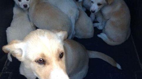 El Ayuntamiento de Madrid logra dar casa al 92% de animales anunciados en su web
