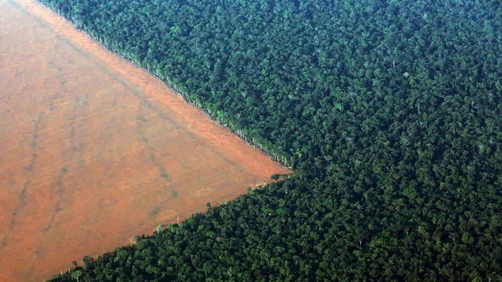 Ganó Bolsonaro, pierde la Amazonia: todo lo que esta victoria implica para el planeta