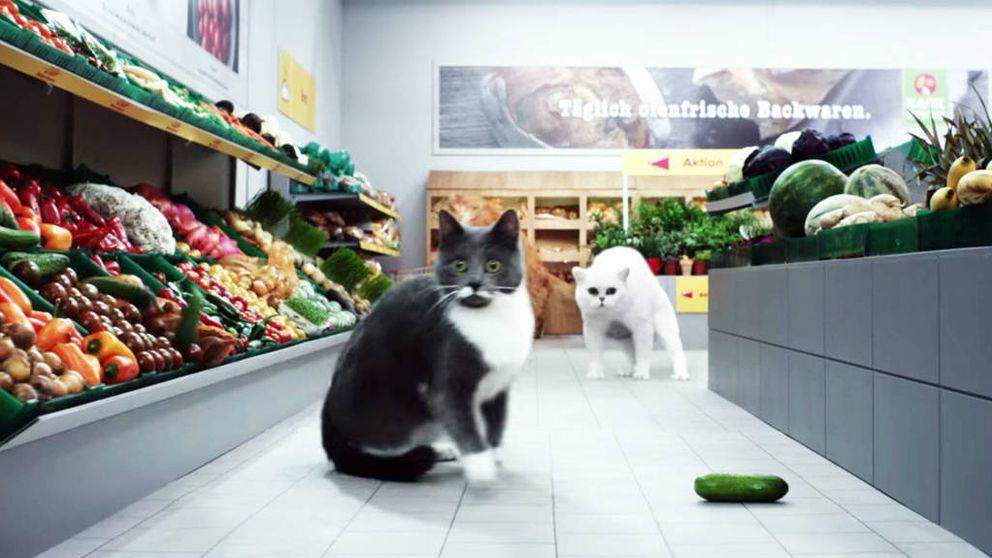 Los gatos hacen la compra en el supermercado: un divertido anuncio que rompe la Red