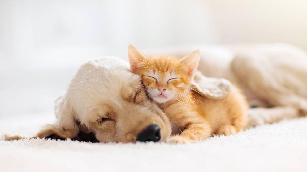 ¿Los perros y los gatos sueñan como nosotros? Esto es lo que dice la ciencia