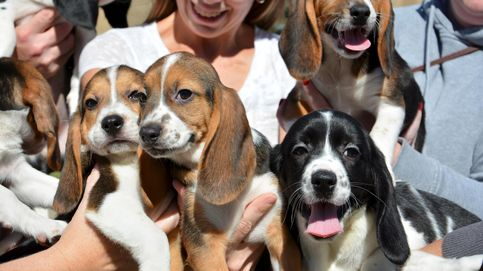 El 52% de los españoles prefiere a sus mascotas antes que a los seres humanos