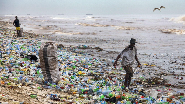 Mohos y algas: nuevas ideas para reciclar la basura que inunda el mundo