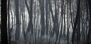 Post de Detenido un hombre por causar un fuego por una imprudencia en Ourense