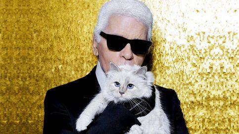 Un año sin Lagerfeld: ¿qué fue de Choupette, la gata heredera de más de 180 millones?