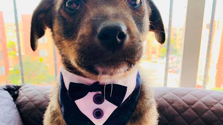 Vicente, el cachorro al que dejaron plantado el día de adoptarlo, ya tiene hogar