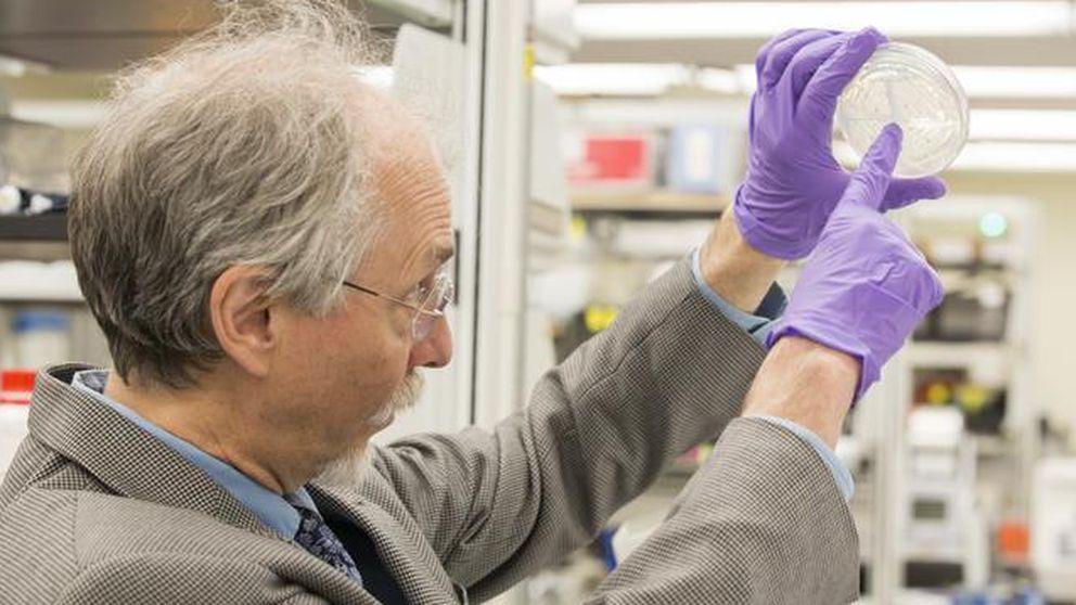 """Crean """"el Everest de la biología"""", un cromosoma complejo de diseño"""