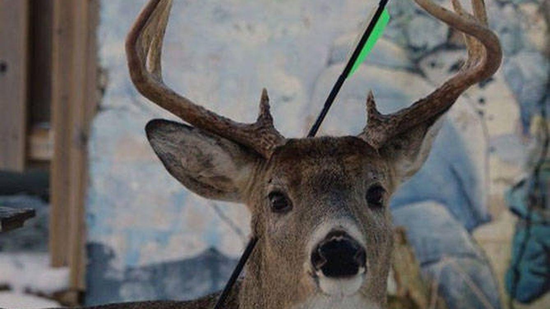 Carrot, el ciervo mágico de la flecha clavada en la cabeza