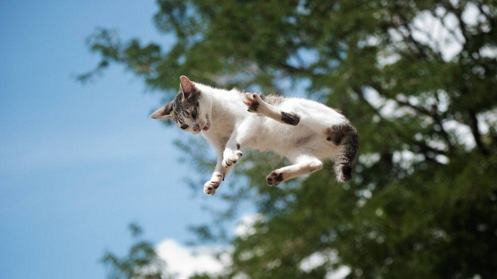 ¿Por qué los gatos siempre caen de pie? El enigma eterno que la física no puede resolver