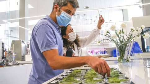 Kimitec construye en Almería el mayor centro de biotecnología agrícola de Europa