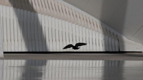 Palomas, las aves que mejor se han adaptado