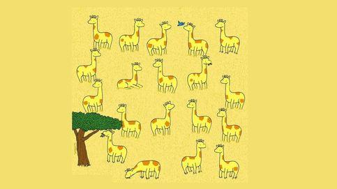 Acertijo viral: ¿eres capaz de encontrar a la jirafa que no tiene pareja?