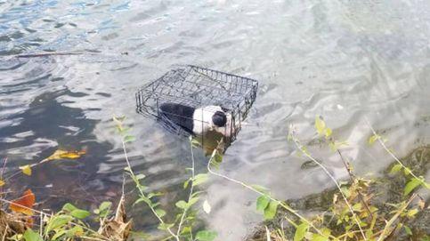 Rescata a un cachorro enjaulado en un lago helado y ahora quiere adoptarlo