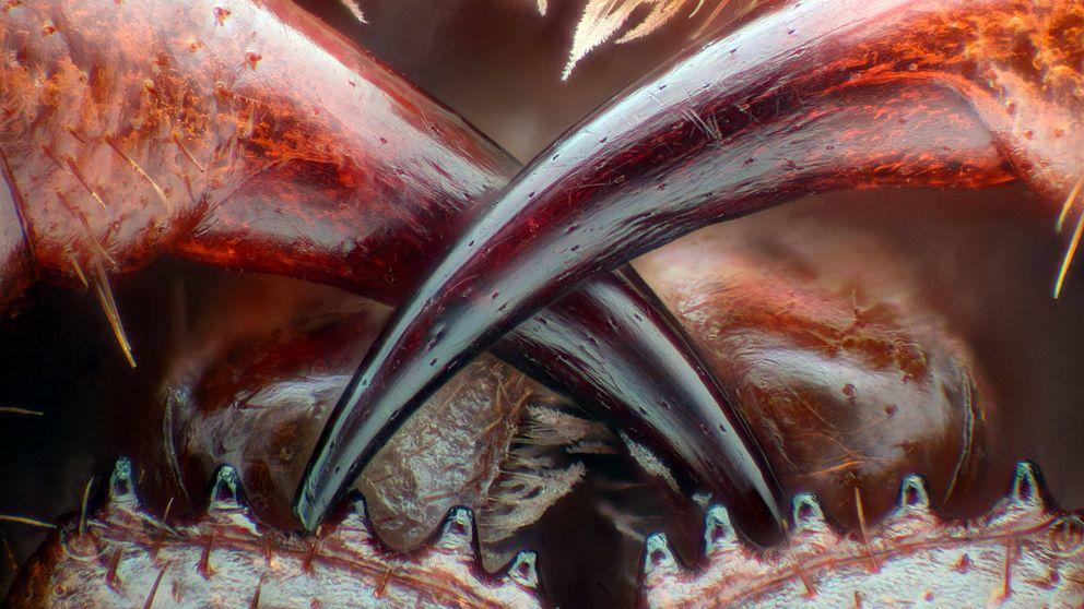 Un mundo diminuto: las mejores fotografías hechas al microscopio