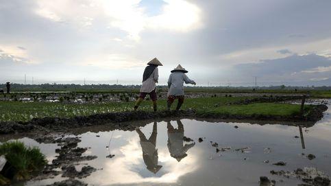 Plantación de arroz en Indonesia y vacunación anual en caballos: el día en fotos