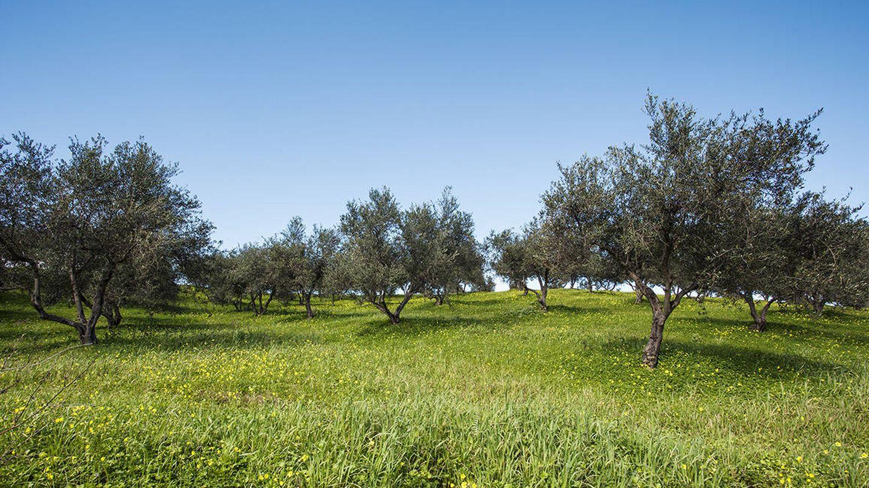 La cosmética con aceite de oliva es perfecta un apostar por un consumo de belleza más sostenible. (Korres)