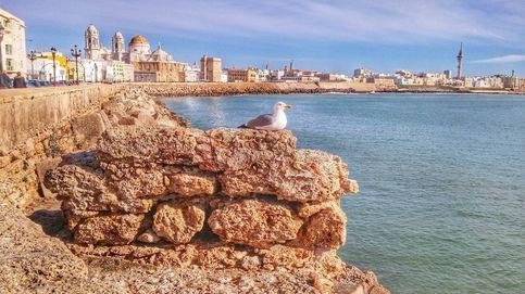 Hallan restos fenicios del puerto de Cádiz al rehabilitar el tablao al que iba Lola Flores