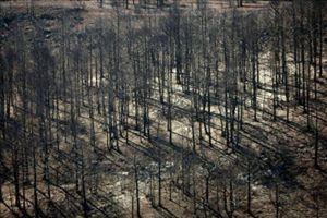 El fuego ha arrasado ya más 12.000 hectáreas en Aragón, sobre todo en Teruel