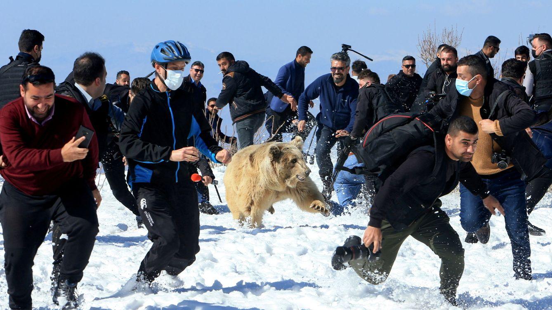 Liberan a un grupo de osos en Irak y se vuelven contra la multitud que lo presenciaba