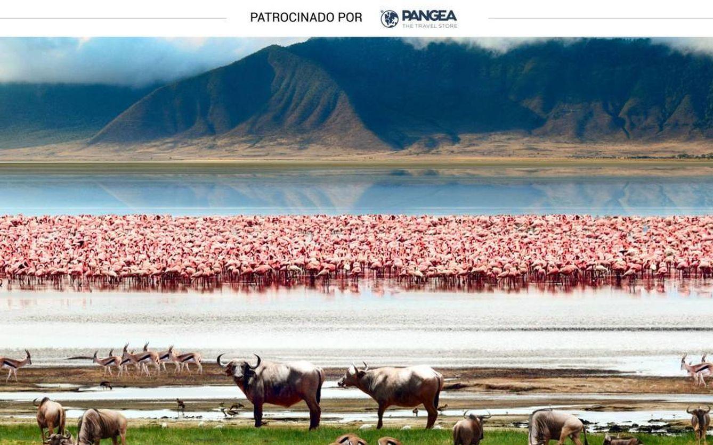 Foto: Uno de los preciosos paisajes que se pueden ver durante un safari por Tanzania. (iStock)