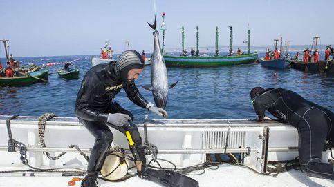 Petaca Chico, el atún de Cádiz que se hizo global... y ahora se devora en España
