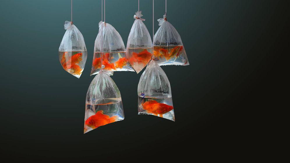 Foto: Sal, pescado y marisco contienen microplásticos. (iStock)
