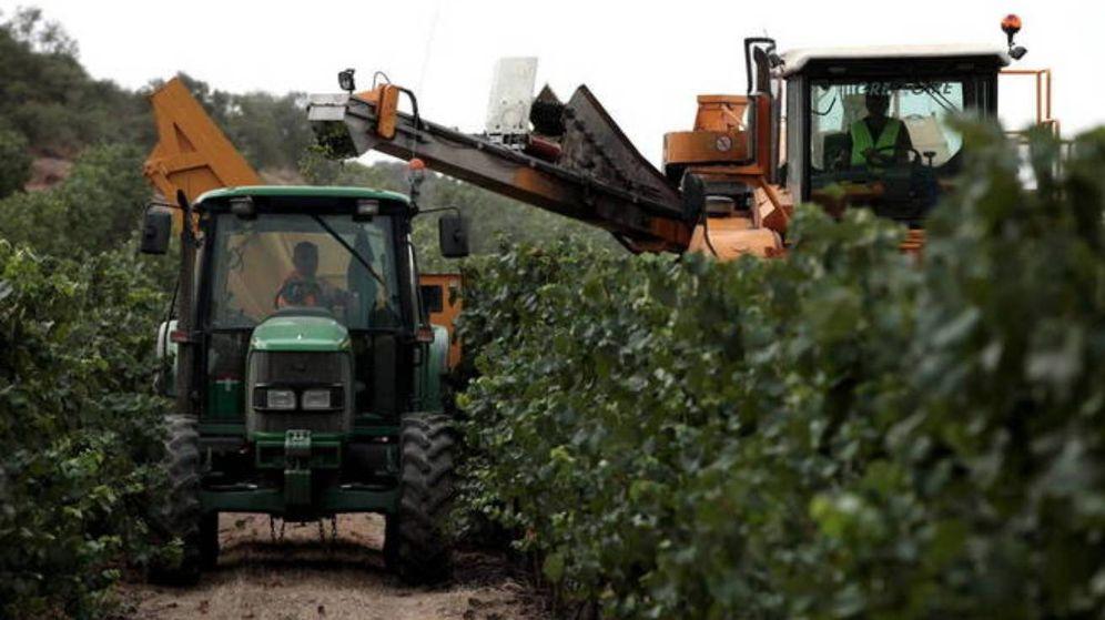 Foto: Operarios, trabajando los viñedos para cava en una plantación de Cataluña. (EFE)