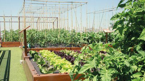 9 restaurantes de España que cultivan y producen sus propias verduras