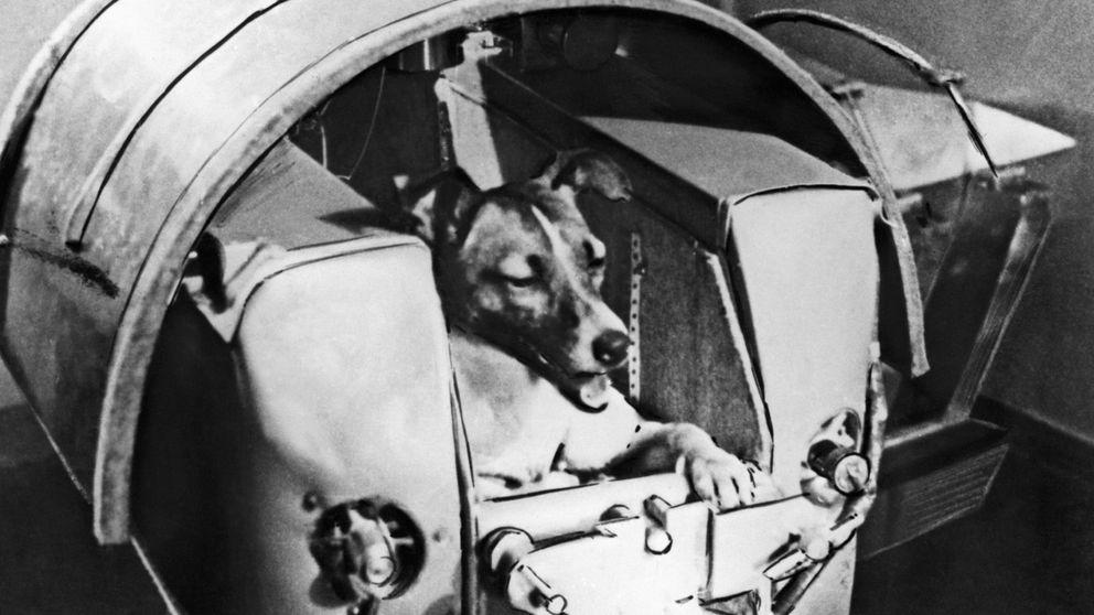 La triste historia de la perra Laika, el primer ser vivo en órbita