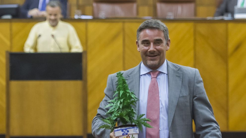 Ofensiva de Podemos a partir de septiembre para legalizar el uso integral de la marihuana