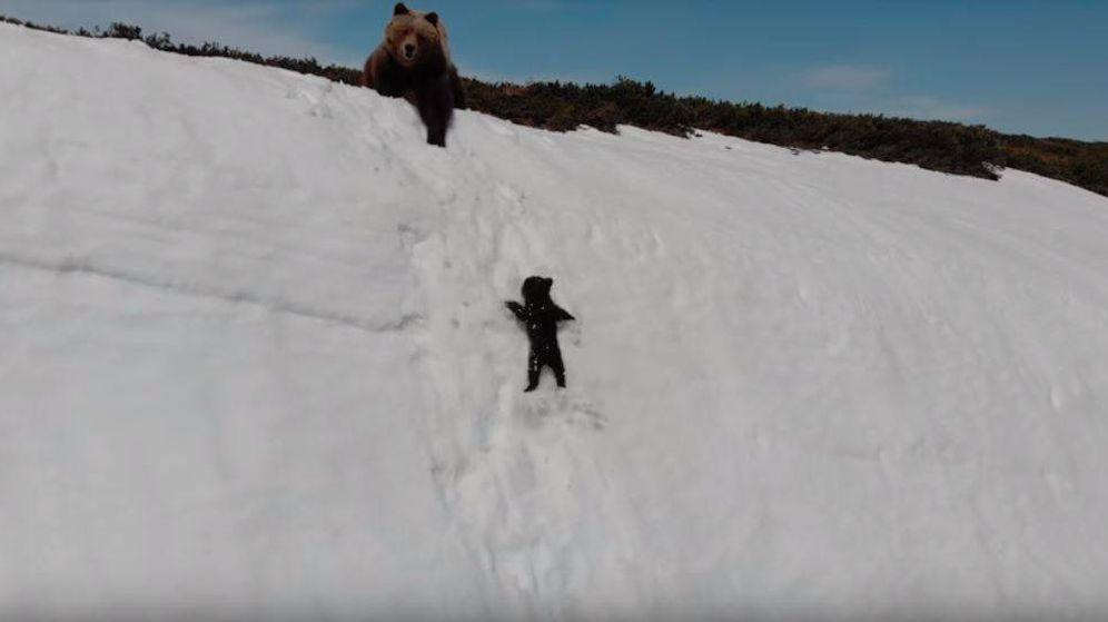 Foto: Los osos filmados por el dron (ViralHog / YouTube)