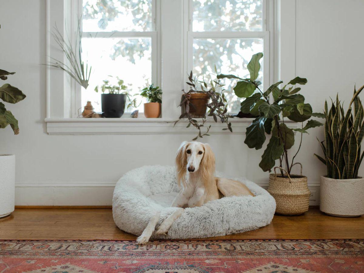 Foto: Camas para perros y gatos: cómo descansar a pata suelta (Chewy K. para Unsplash)