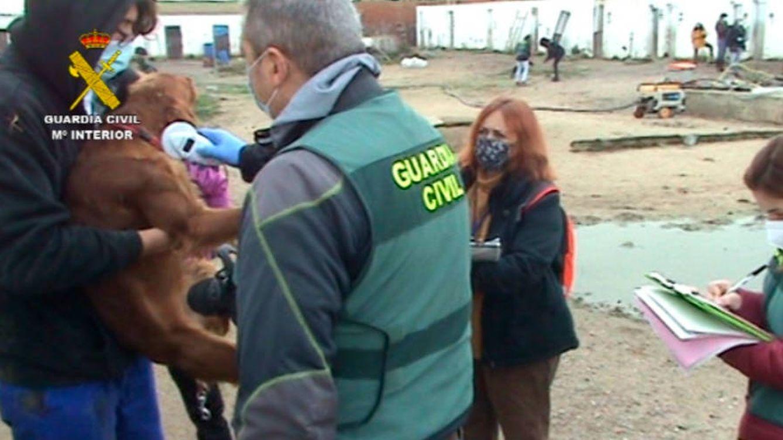 Detenido por tener una perrera clandestina en Parla con más de 100 perros