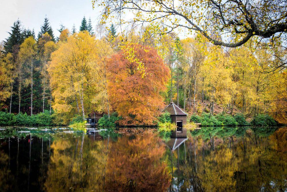 Foto: El bosque encantado de Faskally, en el condado de Perthsire.