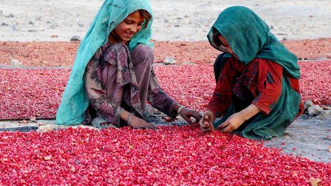 Agricultura en Kandahar
