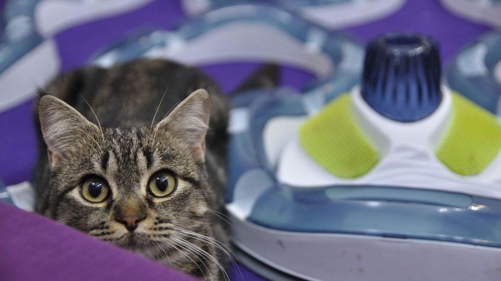 Foto: Hoy, el mundo celebra el Día Internacional del Gato. (EFE)