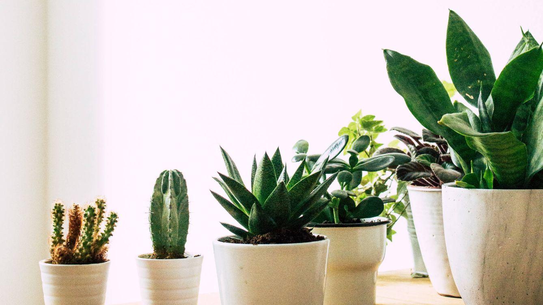 Estos 5 maceteros increíbles quieren que llenes de vida (y plantas) tu casa